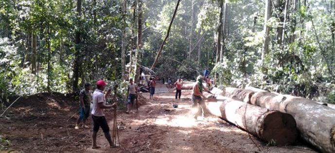 terra indigena desmatamento