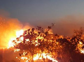 incendio amazomas amazônico